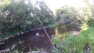 Форелька на 300 (видео-отчет) рыбалка июнь 2015 Ловля форели на спиннинг