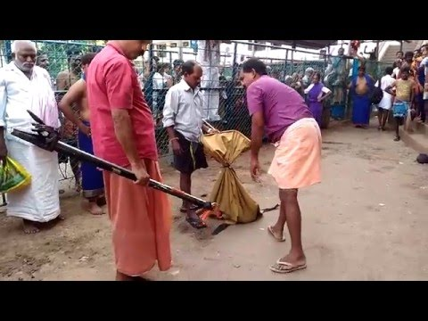 Big Snake Found in sabarimala Temple