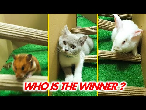Cat Kitten vs Hamster vs Rabbit. Who is the BEST? Battle in the GAINT Maze with Life of Pets Hamham