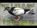How To Cure Breathing Problems In Pigeon Birds By Aman Prabhakar mp3