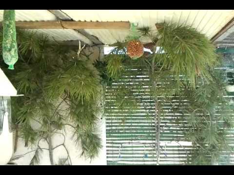 Voladera de jilgueros grande youtube for Como disenar un jardin grande