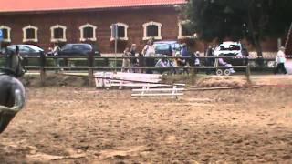 Konie z Bałtowa