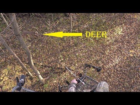 The bucks are moving in OHIO!! #Nov 4th Rut Hunt# - YouTube