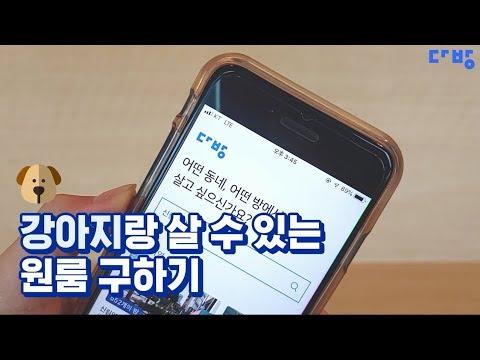 [다방활용법] 다방앱 맞춤필터(15's) #반려동물편