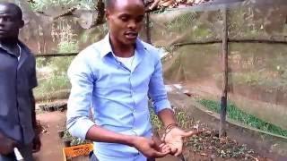 Art of gardening in Uganda