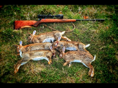 Rabbit hunting with the 17 Hmr