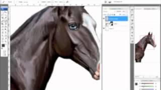 Akhal Teke Horse Drawing