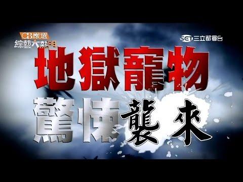 【今晚的亮點!毛小子聯誼會!!】20151225 綜藝大熱門