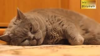 Подборка Смешные кошки и коты Ржака до слёз