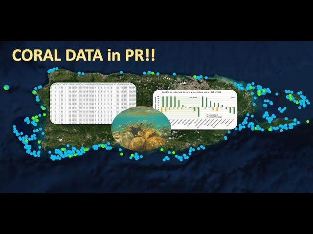 Video: Datos de arrecifes de coral en Puerto Rico