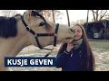 Hoe leer je je paard of pony kusje geven? ► VRIJHEIDSDRESSUUR