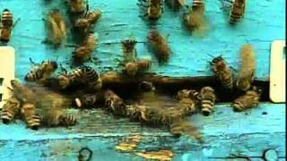 «Пчелиное царство»