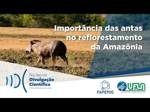 Minuto do Câmpus: Importância das antas no reflorestamento da Amazônia