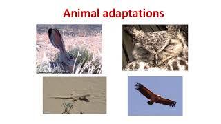 Mojave Desert - Plant and Animal Adaptations