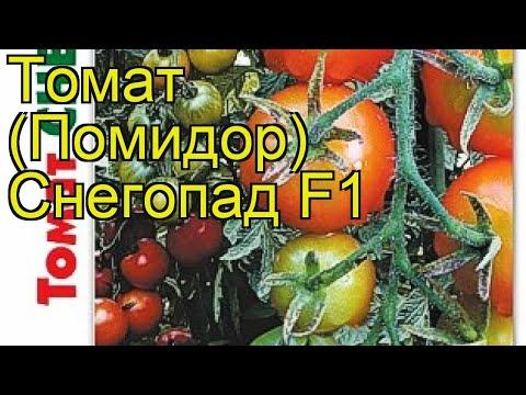 Томат Снегопад F1. Краткий обзор, описание характеристик solanum lycopersicum Snegopad F1
