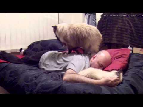 Cat Massage and Cuddle - PoathCats / PoathTV / Floppy Ragdoll Cats