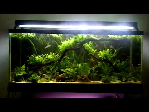 Fish tank question what is your dream tank youtube for Fish tank riddle