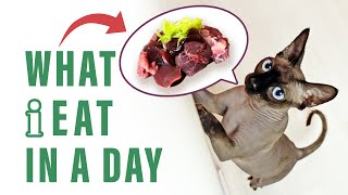 WHAT I EAT IN A DAY | RAW MEAT FOR CATS