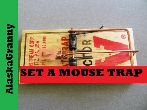 how to set a mouse trap or rat trap victor trap youtube. Black Bedroom Furniture Sets. Home Design Ideas