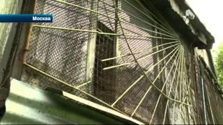 Подробности похищения породистых голубей