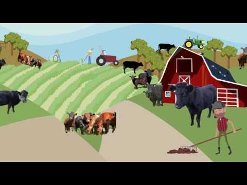 Irish Organic Beef Introduction