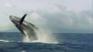 Чудеса океана Хищник или жертва National Geographic 2020 Full HD 1080p