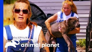 Injured And Terrified Dog Opens Up To His Rescuers | Pit Bulls & Parolees