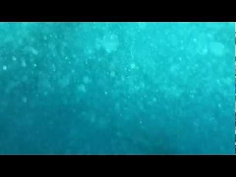 Panama - Underwater Tuna Frenzy!