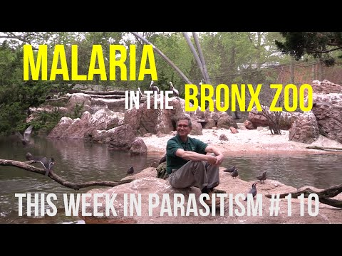 TWiP 110 - Malaria in the Bronx Zoo
