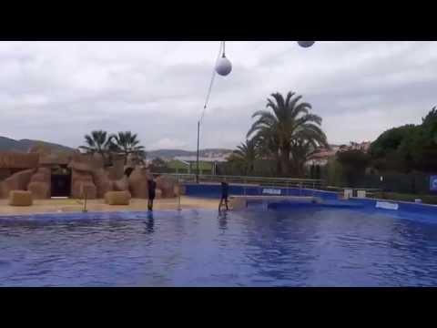 Marineland, Dolphinarium, Marine ZOO, Waterpark, Cataluna, Spain