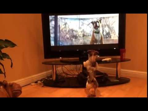 Jack Russell responds to John Lewis Christmas Advert (2016)