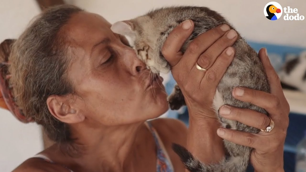 Woman Moves To Beautiful Island And Starts Rescuing Cats | The Dodo