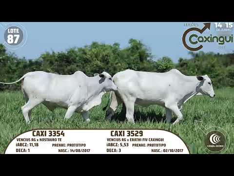 LOTE 87   CAXI 3354, CAXI 3529
