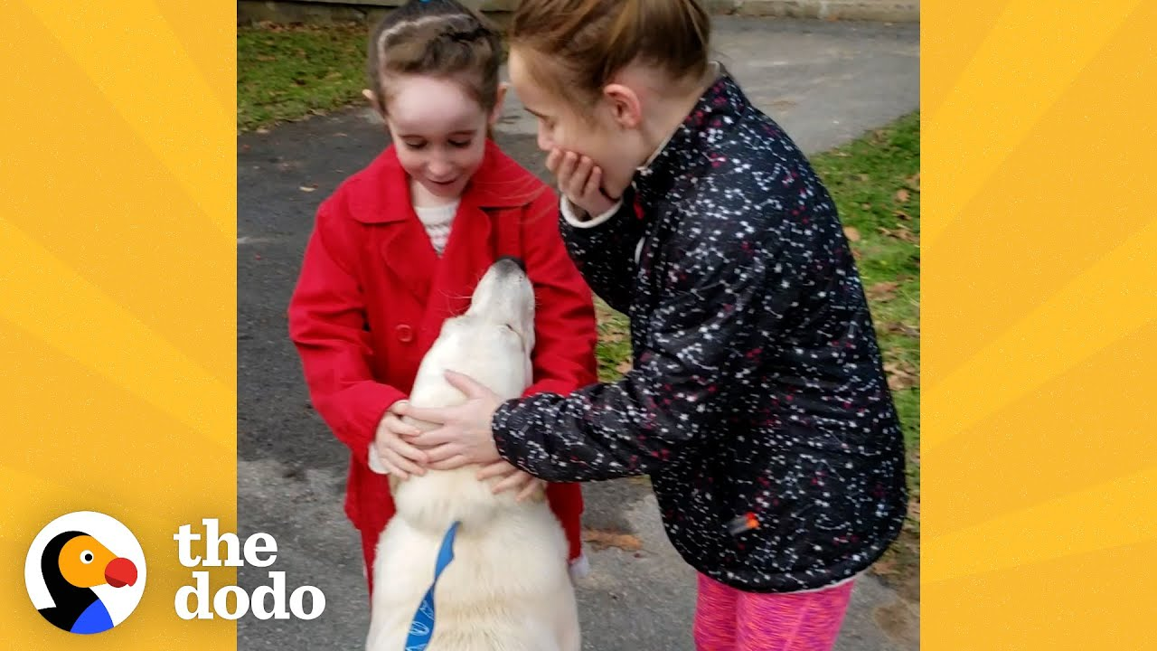 Download Mom Secretly Adopts A Shelter Dog Her Daughters Fell In Love With | The Dodo