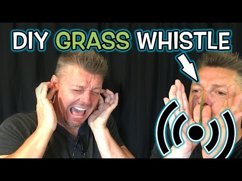 How to Make Grass Noisemaker - DIY Whistle!