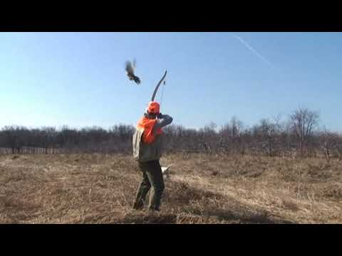 Traditional Recurve Bow Hunting Pheasant