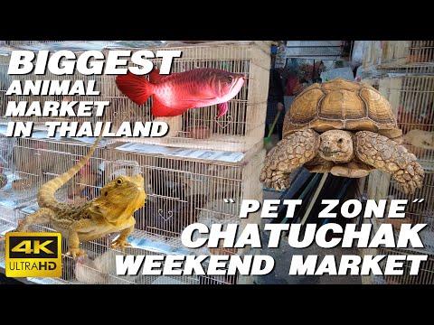 CHATUCHAK WEEKEND MARKET | PET ZONE | Biggest Animal Market in Thailand