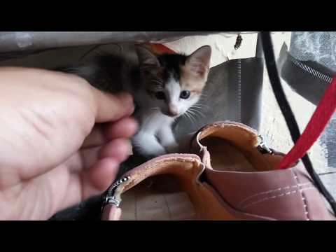 Cute Kittens Doing Funny Things 2020 - baby kittens meowing - kittens playing