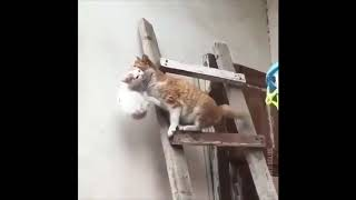 Pussy cat stories | Funny cats compilation