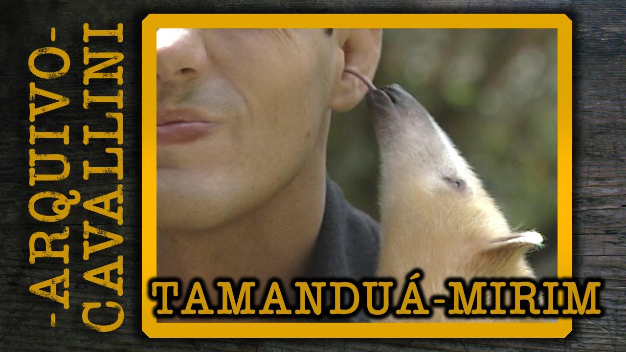 musica lingua de tamandua