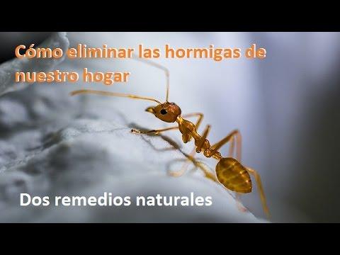 C mo eliminar las hormigas de casa dos m todos naturales - Remedios caseros para eliminar hormigas en casa ...