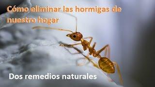 Como eliminar o controlar plaga y hormigas en arboles - Plaga hormigas en casa ...