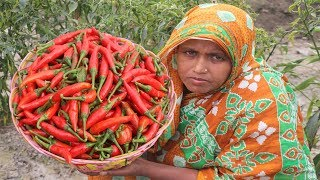 Farm Fresh Red Chili Pickle Recipe Bengali Lal Marich Ka Achar Cooking Easy Stuffed Red Chili Pickle