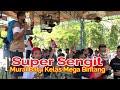 Walikota Cup  Probolinggo Aksi Juara    Murai Batu Tiket Rp  Juta  Mp3 - Mp4 Download