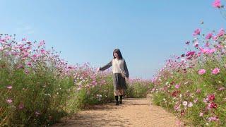 #117 CẢ NHÀ ĐI NGẮM HOA COSMOS Ở CV BẦU TRỜI INCHEON [ Cuộc Sống Trên Đất Hàn ]