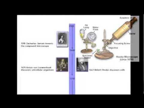 Cell Theory Timeline - YouTube