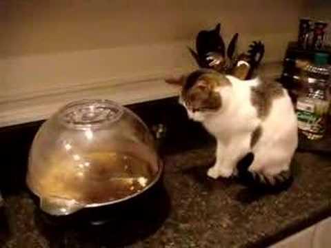 Cat Meets Popcorn Machine