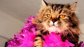 Kediler Hakkında 35 İlginç Gerçek (En İlginç Hayvanlar)