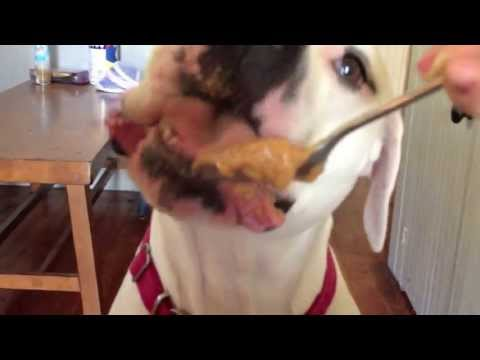 Bad day? Watch my dog eat peanut butter!