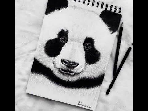 تعلم كيفية رسم الباندا كوايي بطريقة سهلة وخطوات بسيطة رسم دب